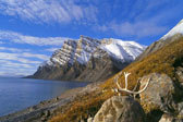 North Baffin Autumn - Panoramic Print